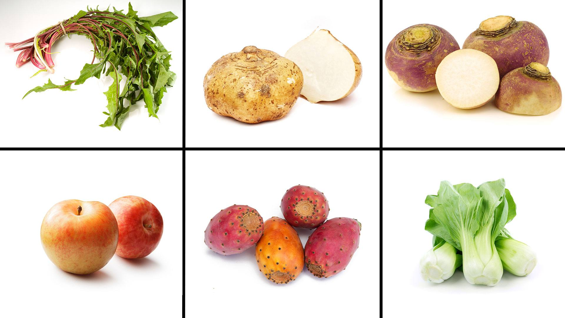 top plant based foods